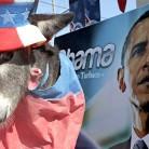 donkey obama