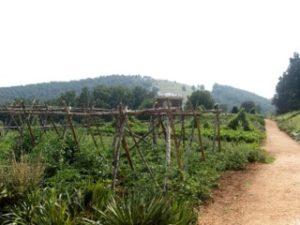 Monticello Garden 2